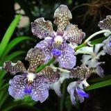 Ogrody-Botaniczne-Singapuru-31-160x160