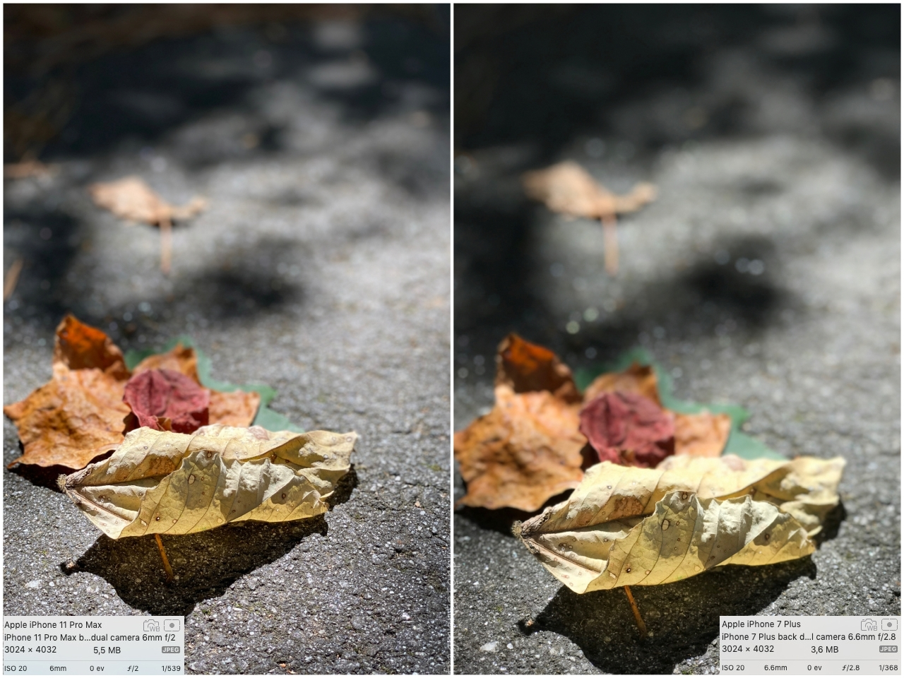 przykładowe zdjęcia tryb portretowy Portrait Mode iPhone 11 Pro Max photo