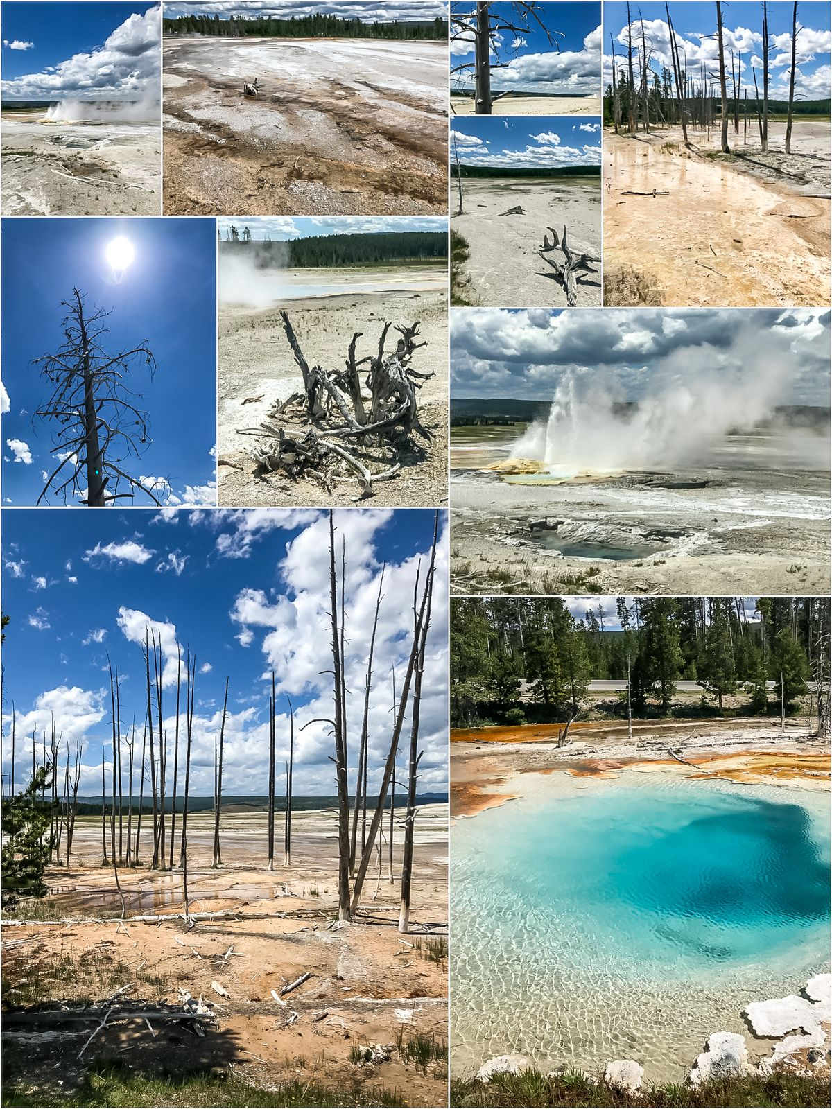 Lower Geyser Basin co zobaczyć w Parku Yellowstone